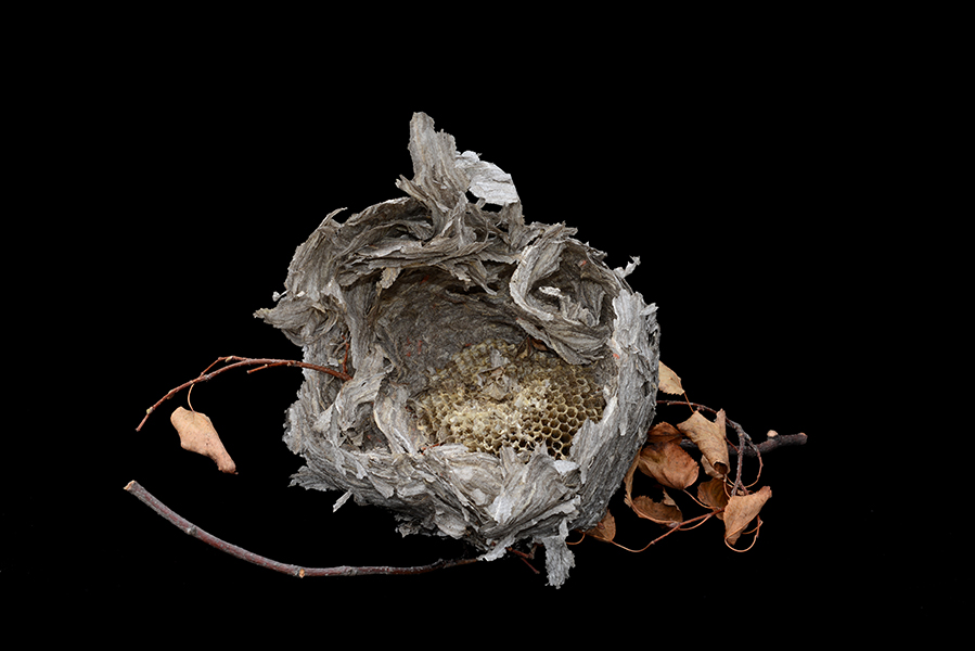http://www.paulamccartney.com/files/gimgs/25_wasp-nest-6483.jpg