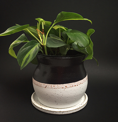 http://www.paulamccartney.com/files/gimgs/27_black-and-white-plant-pot.jpg
